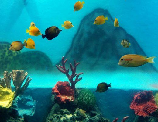 Aquarium-tarapore8
