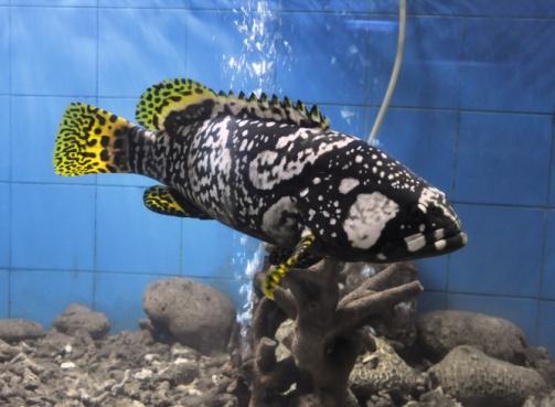 Marine Aquarium, Digha